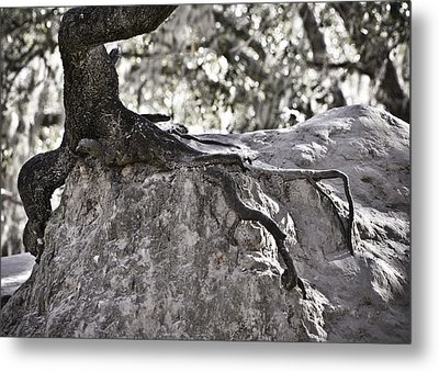 Holding On Metal Print by Carolyn Marshall