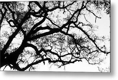 Holding The Sky Metal Print by Vera Rodrigues