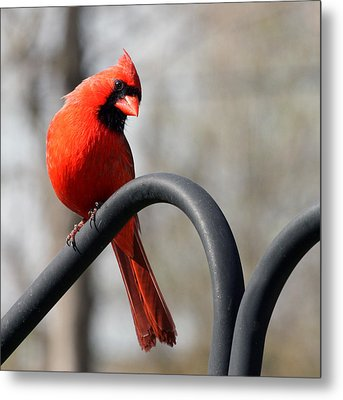 Holiday Red Metal Print by Penny Hunt