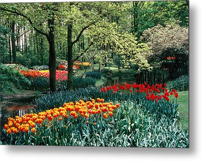 Holland Kuekenhof Garden Metal Print by Dale P Hanson and Photo Researchers