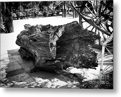 Metal Print featuring the photograph Hollow Log by Thanh Tran