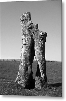 Hollow Trunk Metal Print by Michael Standen Smith