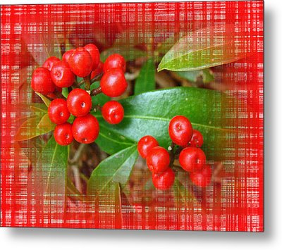 Holly Berries Metal Print by Mother Nature