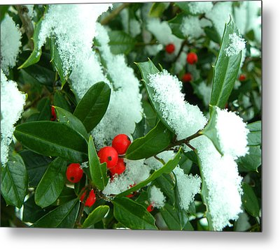 Holly In Snow Metal Print by Sandi OReilly