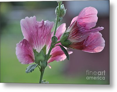 Metal Print featuring the photograph Hollyhocks by Tamera James