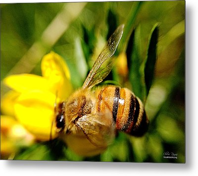 Metal Print featuring the photograph Honey Bee by Chriss Pagani