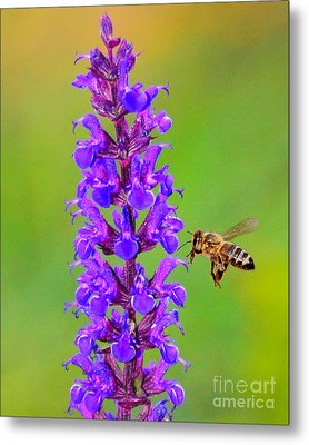 Metal Print featuring the photograph Honeybee N Blooms by Jack Moskovita