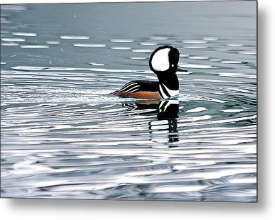 Metal Print featuring the photograph Hooded Merganser by Scott Holmes