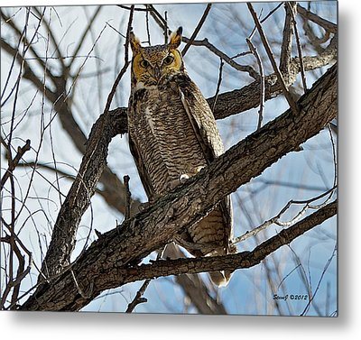 Metal Print featuring the photograph Horned Owl In Tree by Stephen  Johnson