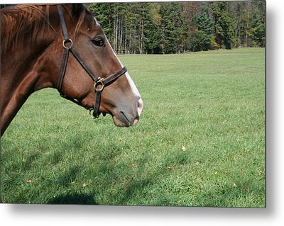 Metal Print featuring the photograph Horse-1 by Denise Moore