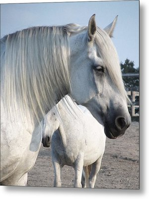 Horse-15 Metal Print by Todd Sherlock