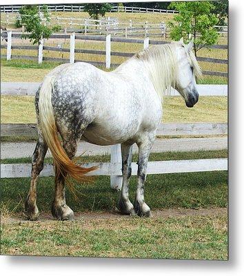 Horse-19 Metal Print