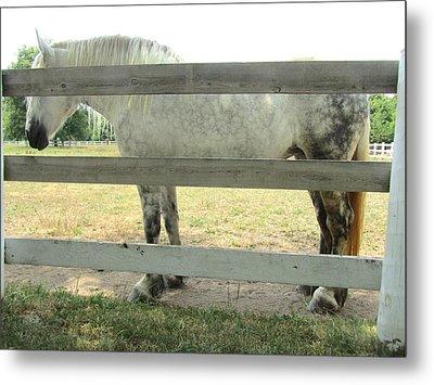 Horse-20 Metal Print