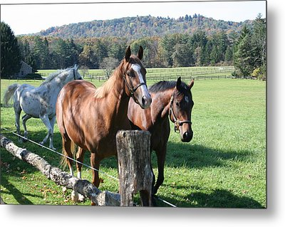 Metal Print featuring the photograph Horse-3 by Denise Moore