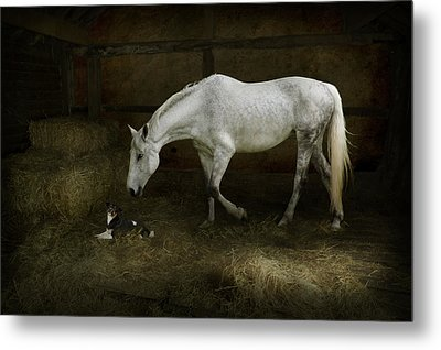 Horse And Puppy In Stable Metal Print