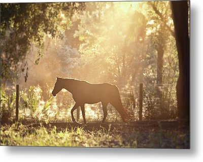 Horse Backlit At Sunset Metal Print by Seth Christie
