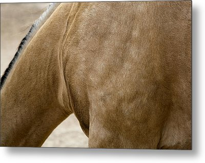 Metal Print featuring the photograph Horse Bending Neck by Lorraine Devon Wilke