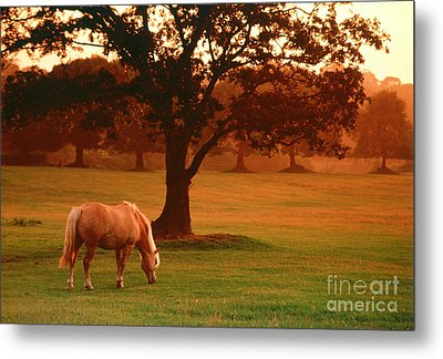 Horse Metal Print by Carl Purcell and Photo Researchers