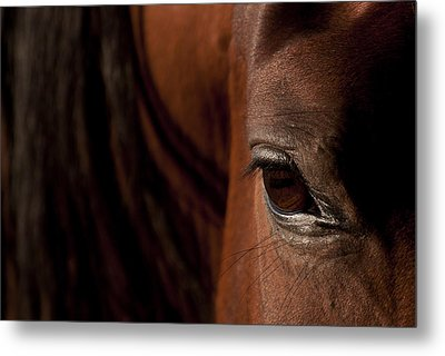 Horse Eye Metal Print by Michael Mogensen
