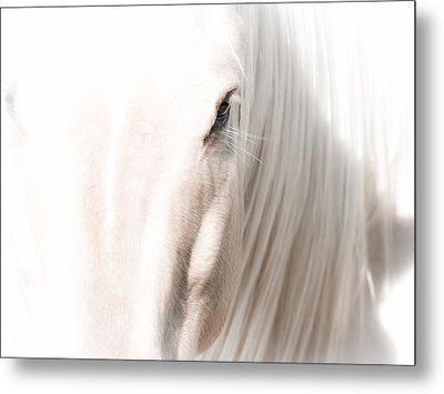 Horse Glow Metal Print by Toni Thomas