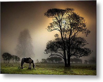 Horse Grazing In Field Metal Print by Land and Light