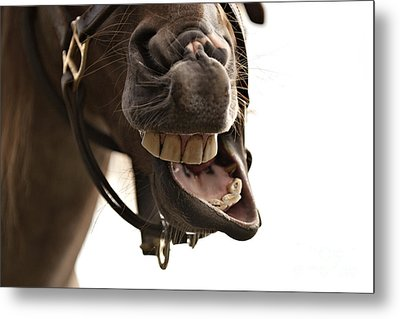 Horse Humour Metal Print by Heather Swan