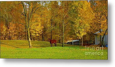 Horse In Autumn Metal Print by Kathleen Struckle