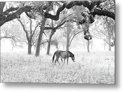 Horse In Foggy Field Of Oaks Metal Print by CML Brown