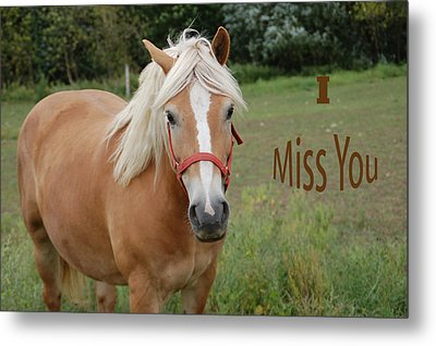 Horse Miss You Metal Print by Aimee L Maher Photography and Art Visit ALMGallerydotcom