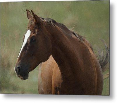 Horse Painterly Metal Print by Ernie Echols