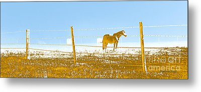 Horse Pasture Revblue Metal Print by Paulette B Wright