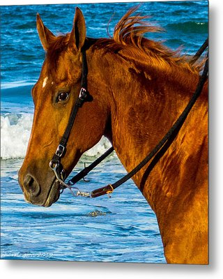 Horse Portrait  Metal Print by Shannon Harrington