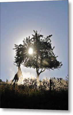 Metal Print featuring the photograph Horse Reaching For Apples by Michael Dohnalek