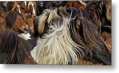 Horse Round-up Metal Print by Arctic-Images