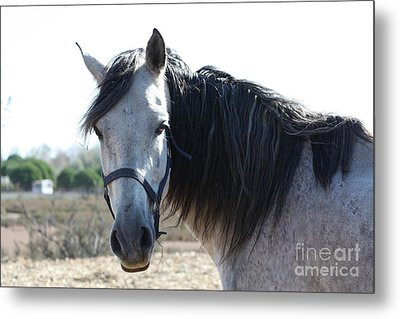Horse With A Look  Metal Print