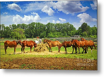 Horses At The Ranch Metal Print by Elena Elisseeva