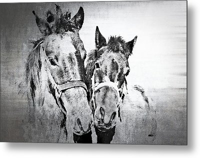 Horses By The Road Metal Print by Kathy Jennings