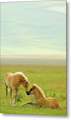 Horses Foals In Field Metal Print by Vittorio Ricci - Italy