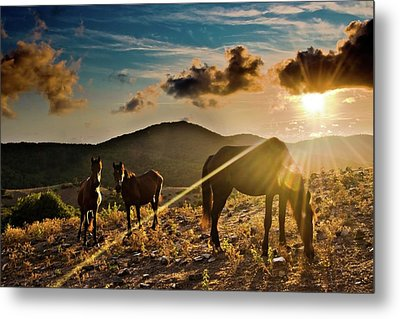 Horses Grazing At Sunset Metal Print by Finasteride