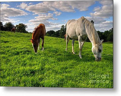 Horses Grazing Metal Print by Rob Hawkins