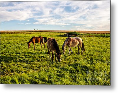 Horses In The Sunset Metal Print by Bodo Herold