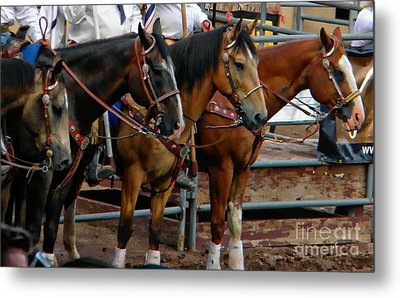 Horses Metal Print by Michelle Frizzell-Thompson