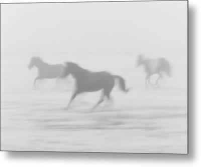 Horses Running In The Fog Mist Saskatchewan Canada Metal Print