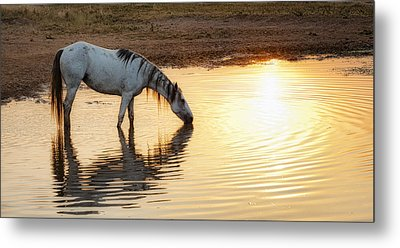 Hot Day Ahead Metal Print by Ron  McGinnis