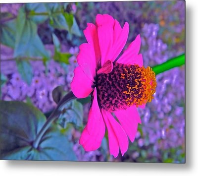 Hot In Pink Metal Print by Randy Rosenberger