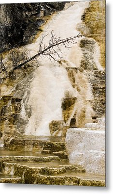 Metal Print featuring the photograph Hot Spring Pine by J L Woody Wooden