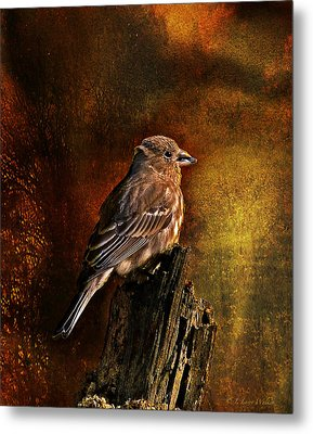 House Finch With Sunflower Seed Metal Print by J Larry Walker
