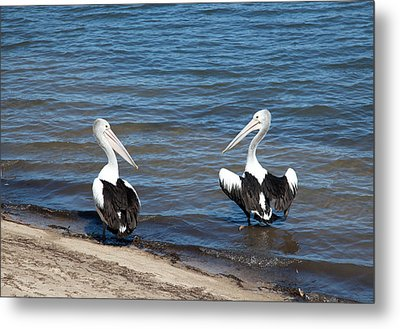 How Are You? Metal Print by Carole Hinding