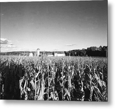 How Corny Metal Print by Jan W Faul