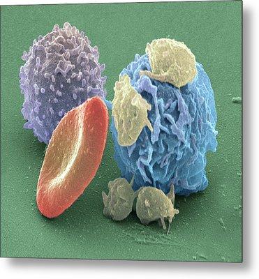 Human Blood Cells, Sem Metal Print by Steve Gschmeissner